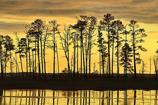 Dana Sohr - Sunset - Blackwater Wildlife Refuge