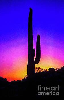 Sunset Cactus  by Thomas Levine