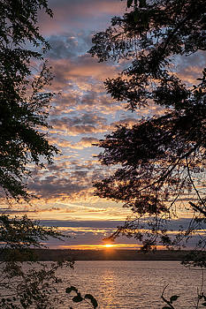 Sunset Caressed by Tree Branch by Mary Lee Dereske