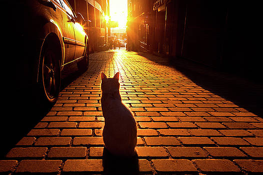 Sunset Cat by Marji Lang