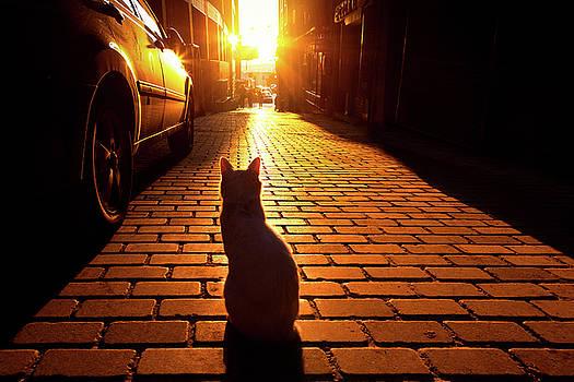 Sunset Cat by Marji Lang