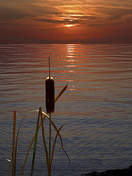 Sunset Cattail by Judy Johnson