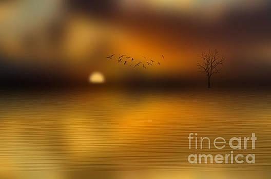 Sunset Dreams by Barbara Dudzinska