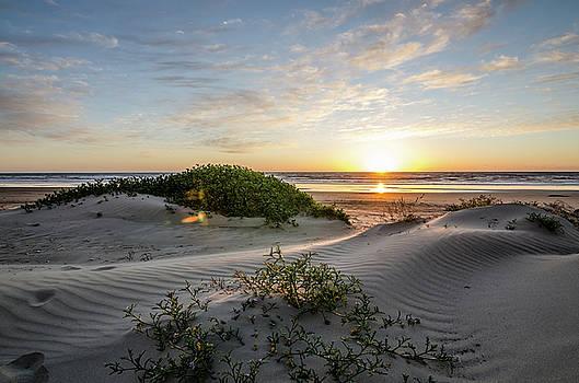 Margaret Pitcher - Sunset Dunes