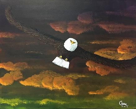 Sunset Eagle by Chris Bishop