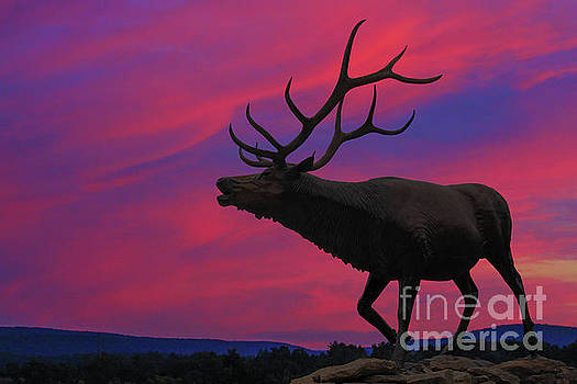 Randy Steele - Sunset Elk