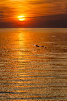 Oscar Gutierrez - Sunset Flight