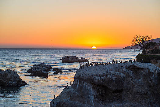 Sunset for the Birds - Pismo Beach - California by Bruce Friedman