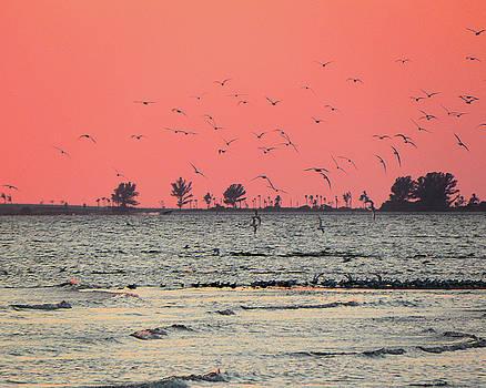 Sunset for the Birds by Rosalie Scanlon