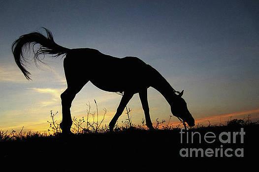 Sunset Horse by Dimitar Hristov