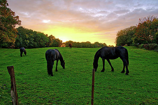 Sunset horses by Ingrid Dendievel