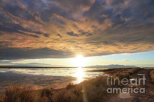 Sunset Illumination by Spencer Baugh