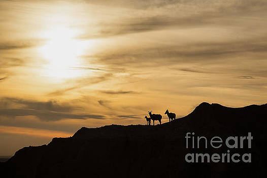 Sunset in Badlands by Natural Focal Point Photography