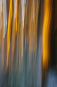 Sunset in forest by Davorin Mance