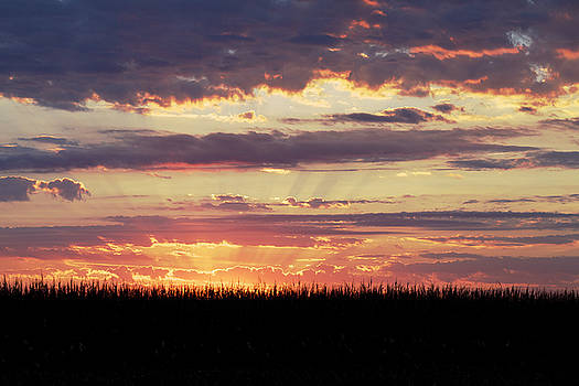 Sunset in the Corn by Jane Eleanor Nicholas
