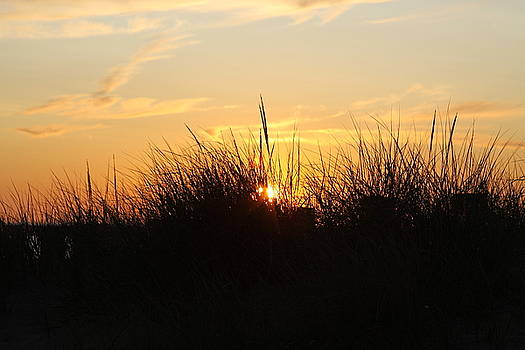 Sunset In The Grass by Chuck Bailey