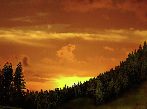 Virginia Palomeque - Sunset in the Pine Forest