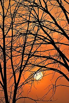 Frozen in Time Fine Art Photography - Sunset in the Woods