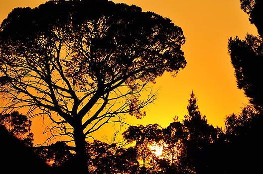 Clayton Bruster - Sunset in Tujunga