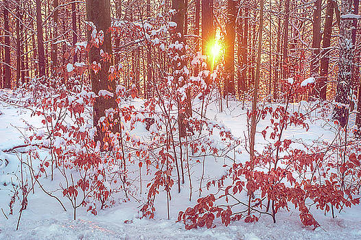 Jenny Rainbow - Sunset in Winter Forest