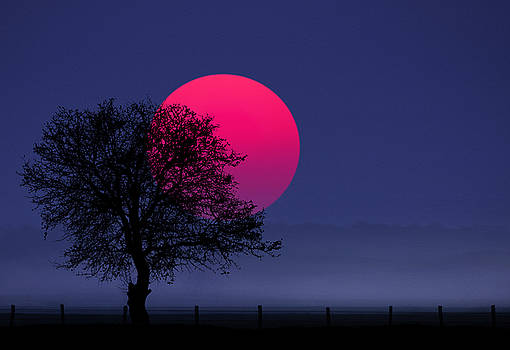 Sunset magenta by Bess Hamiti