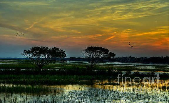 Sunset Marsh by Kathy Baccari