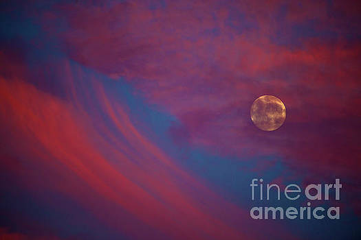 Sunset Moon Rise by Reva Dow
