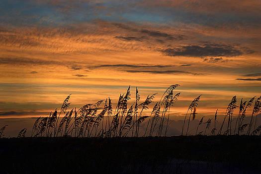 Dana Sohr - Sunset on Beach Grass