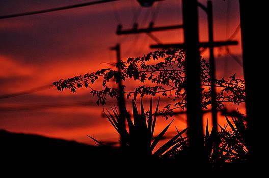 Clayton Bruster - Sunset On SoCal Suburb