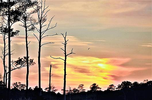 Sunset On the Eastern Shore by Kim Bemis