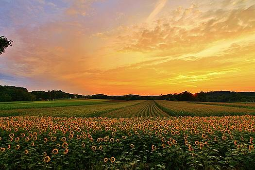 Sunset over the farm by Catie Canetti
