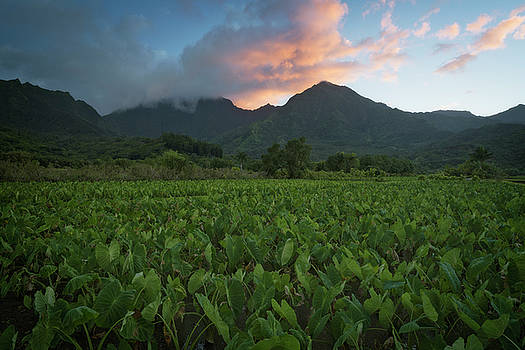 Sunset over the lush mountains and flooded taro fields in mystical Hanalei Valley. by Larry Geddis