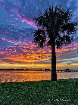 Sunset Palm by Dillon Kalkhurst