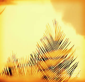 Sunset Palm Fronds by Tim Hester