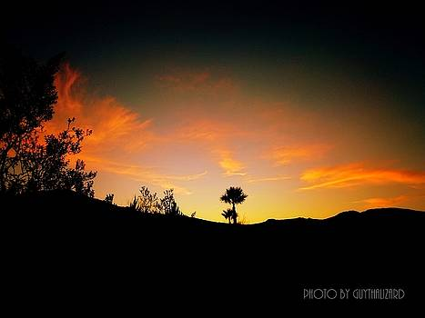 Sunset - Palm Mountain by Guy Hoffman