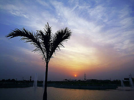 Sunset - palm tree by Atullya N Srivastava