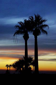 Sunset Palms by Greg Iger