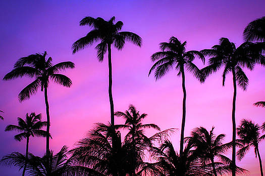 Sunset Palms in Aruba by Todd Dunham
