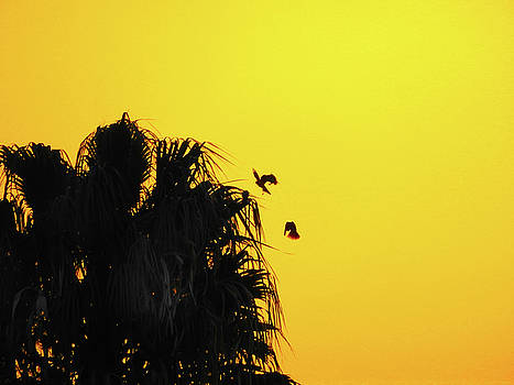 Sunset Parrots by Mark Blauhoefer