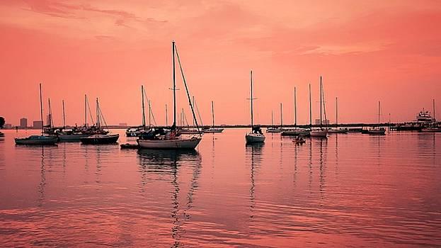 Sunset Pink by Roland Macias