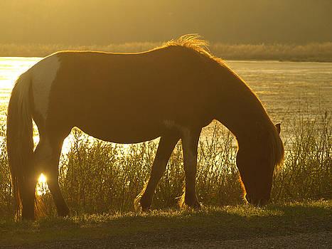 Sunset Pony by Kim