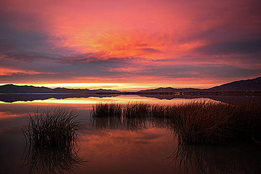 Sunset Reeds on Utah Lake by Wesley Aston