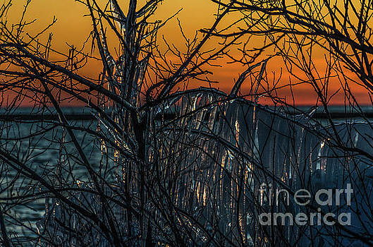 Sunset Reflecting Off Ice on Bare Trees by Sue Smith