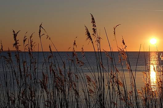 Sunset by Renee Pettersson