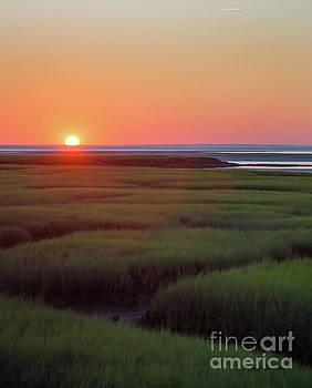 Sunset Romance by Michelle Wiarda-Constantine