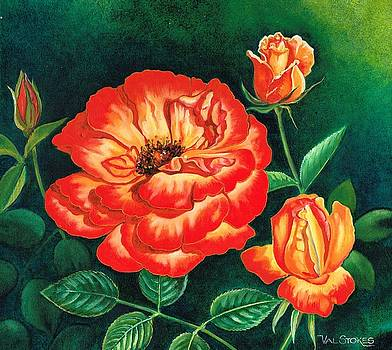 Sunset Rose by Val Stokes