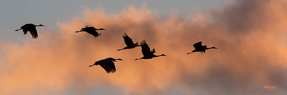 Sunset Sandhill's by Don Anderson