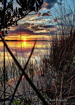 Sunset Seagrass by Dillon Kalkhurst