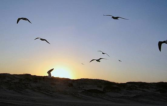 Sunset Seagulls 3 by Camera Candy