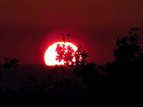 Sunset Silhouette - Close Up by Arlane Crump